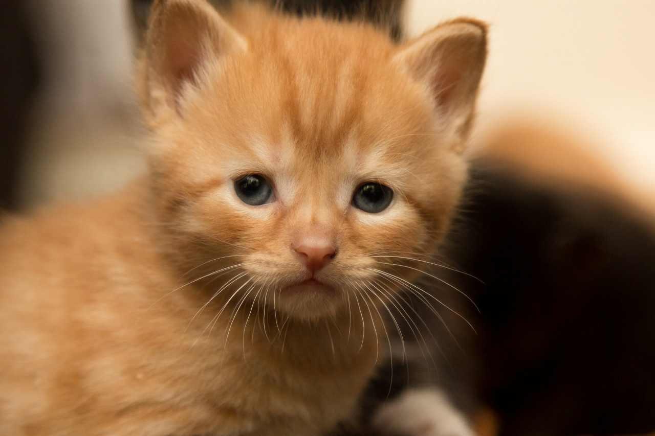 beautiful-cat-1463992847YaL.jpg