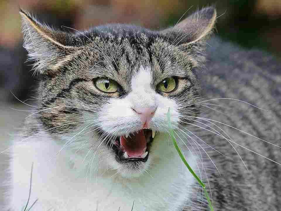 cat-1865538_960_720.jpg