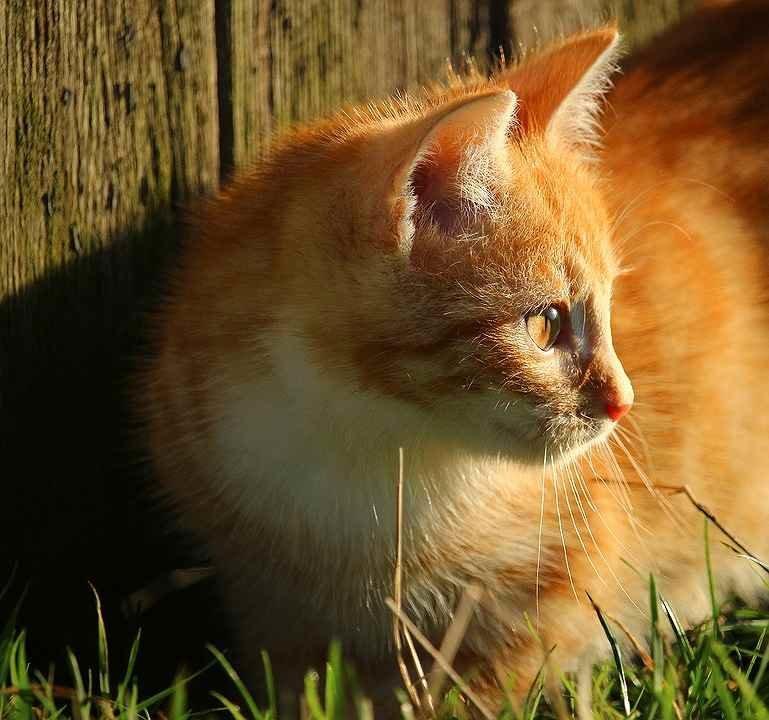 kitten-1083356_960_720.jpg