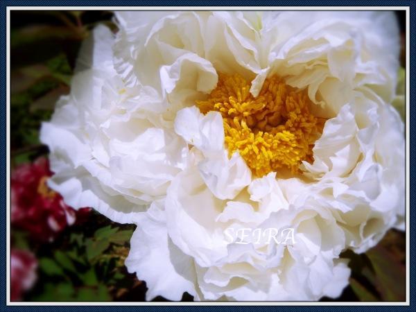 DSCN0702_Fotor.jpg