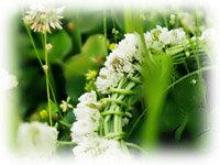 clover2008-1.jpg