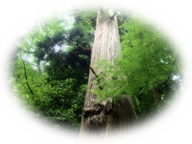 ヒーリング・樹